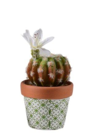 Vaso de Cimento com Cacto com Flor Artificial